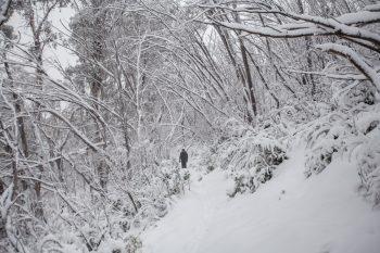 Snow in the Alps, Victoria, Australia