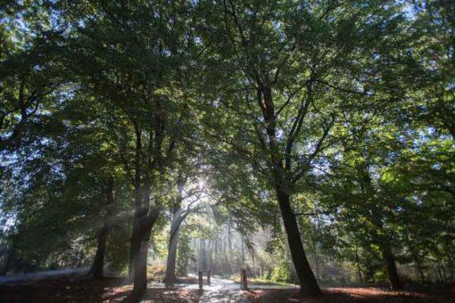 amazing landscape in Hoge Veluwe National Park ©Erika's Way Photography