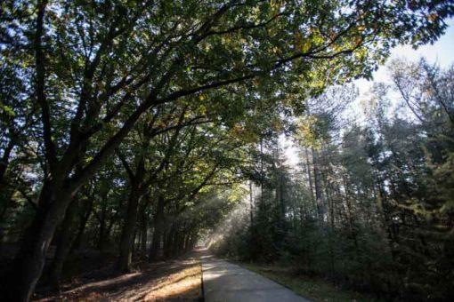 sun rays through the trees ©Erika's Way Photography