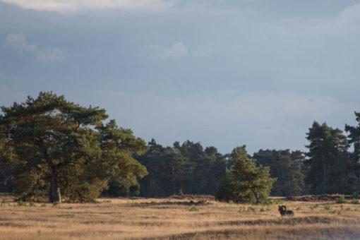Wild animals in Hoge Veluwe ©Erika's Way Photography