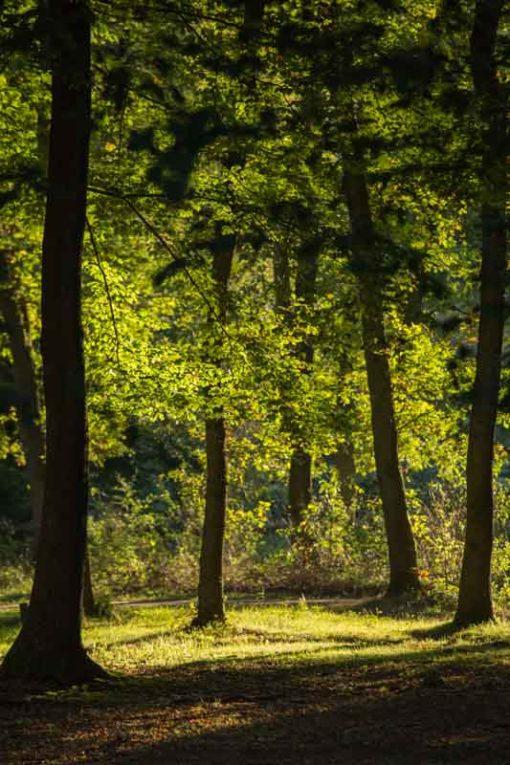 sunset lights in Hoge Veluwe National Park ©Erika's Way Photography