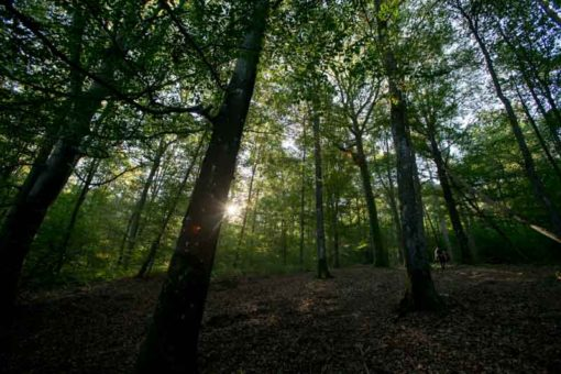 sun filtering through the trees in a Belgian forest in Wallonia region