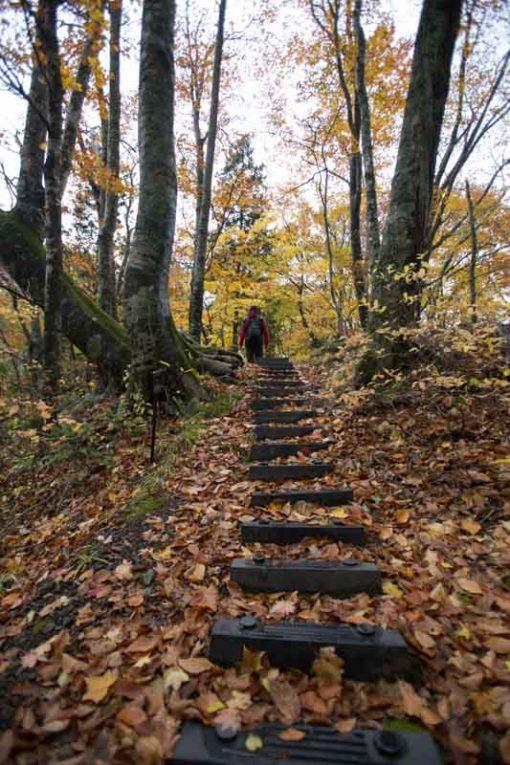 Walking path in the forest in Juniko