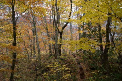 Stunning autumn views in Juniko