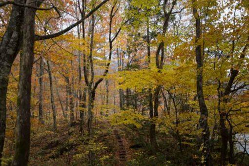 Juniko Autumn colours