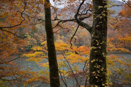 Autumn in Juniko