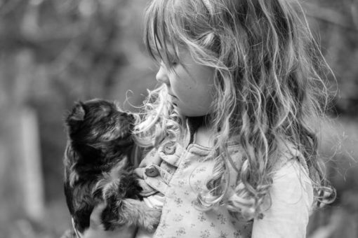 Australian Silky Terrier puppy in a little girl's arms