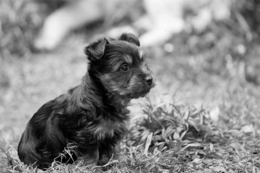 Puppy in the garden