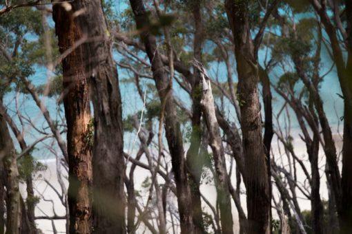 Hiking in the Australian bush at Wilson's Prom National Park