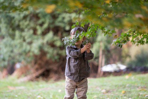 little boy hiding behind a branch