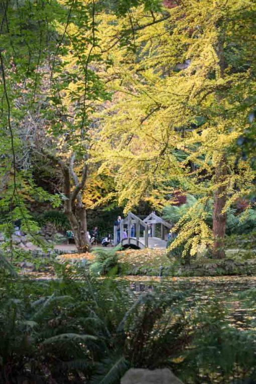 Alfred Nicholas Garden in Autumn