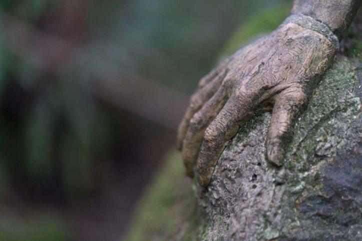 Ricketts Sanctuary: a MUST visit in Olinda, Dandenong Ranges