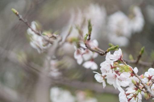 Spring Blooming Gardens in teh Dandenong Ranges