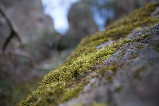 Moss around Hanging Rock