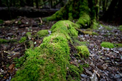 Green and wet moss