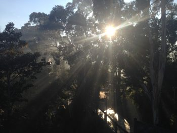sun rays filtering through the trees in Belgrave, Vic