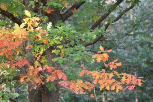 trees changing colour in Autumn ©Erika's Way Photography