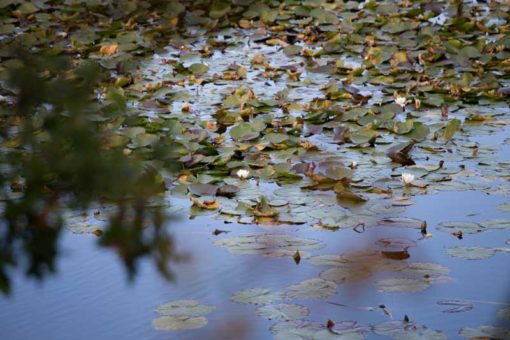 water reflections in Hoge Veluwe National Park ©Erika's Way Photography