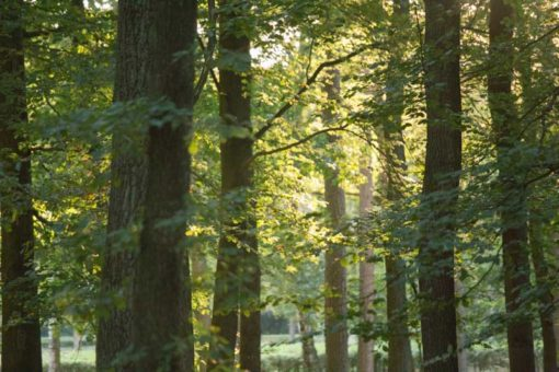 forest in the Netherlands ©Erika's Way