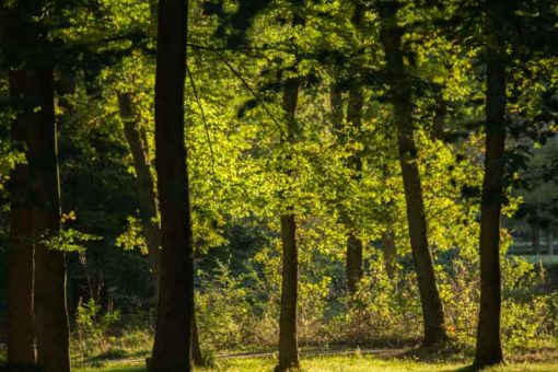sunset in the forest, Hoge Veluwe national park ©Erika's Way