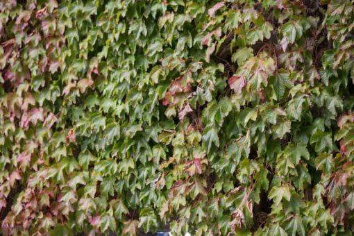 autumn colours in Belgium