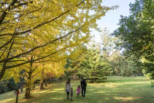 Autumn Family Photo session at Alfred Nicholas Garden