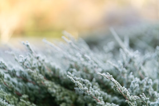 Morning frost in Silvan